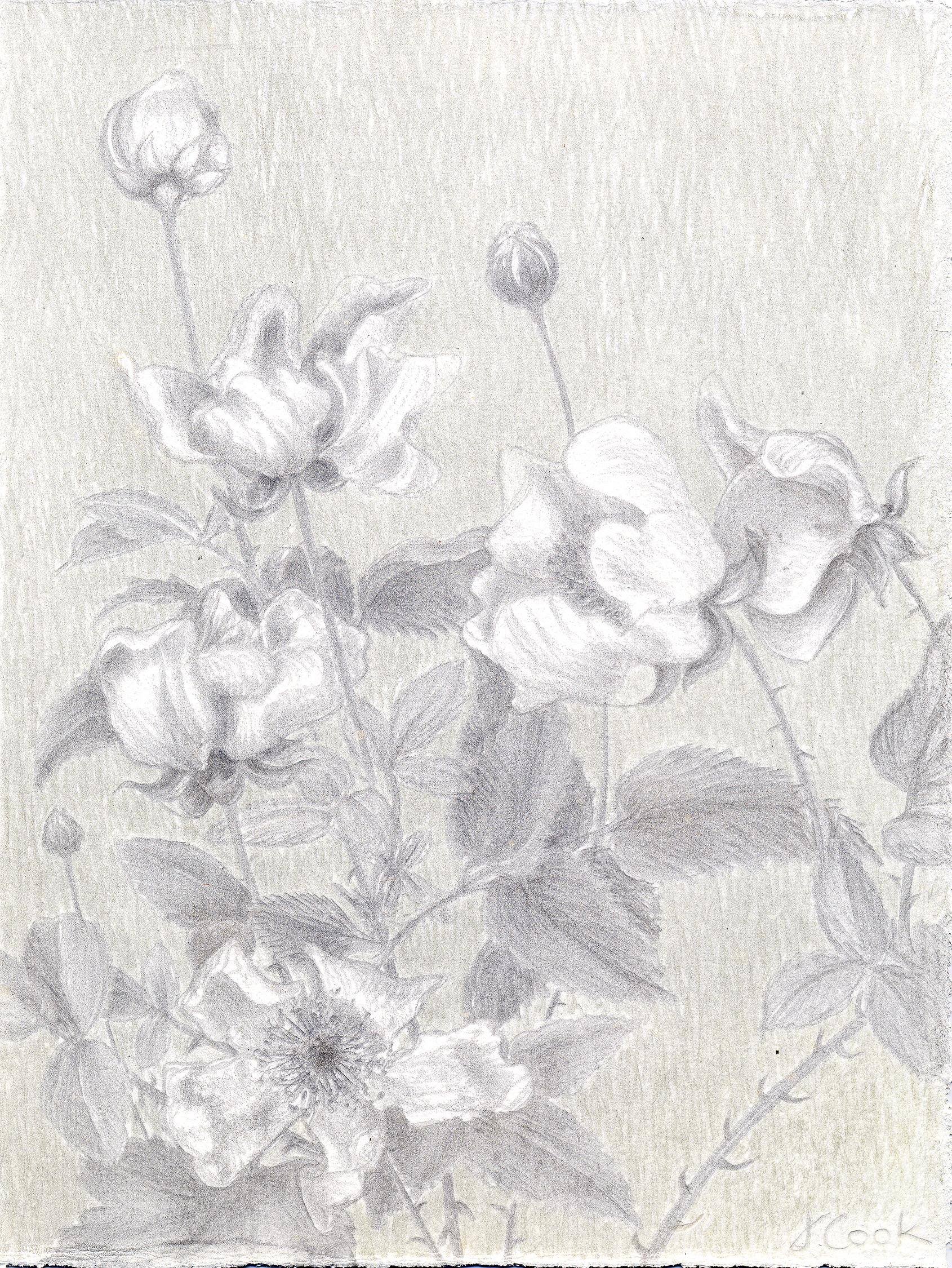 Roadside Blackberries. silverpoint/copperpoint, Jeannine Cook artist