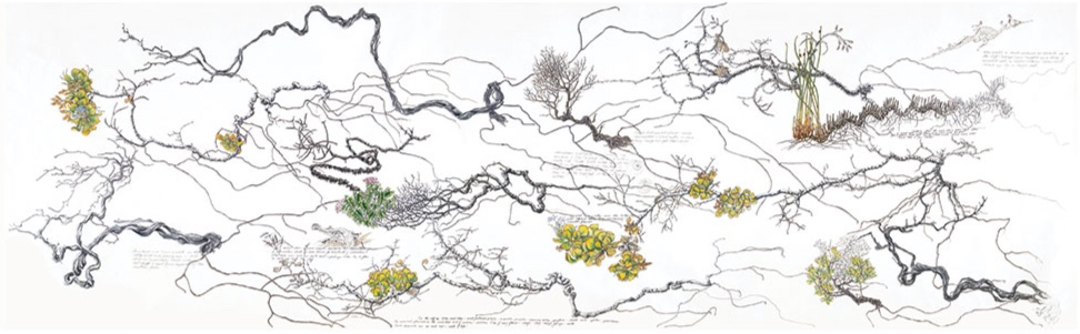 Wind-blown Cliff Top Shoal Cape , 2015 – 2016, 275 x 66cm, watercolour, gouache and pigment ink on Kozo paper, Philippa Nikulinsky artist
