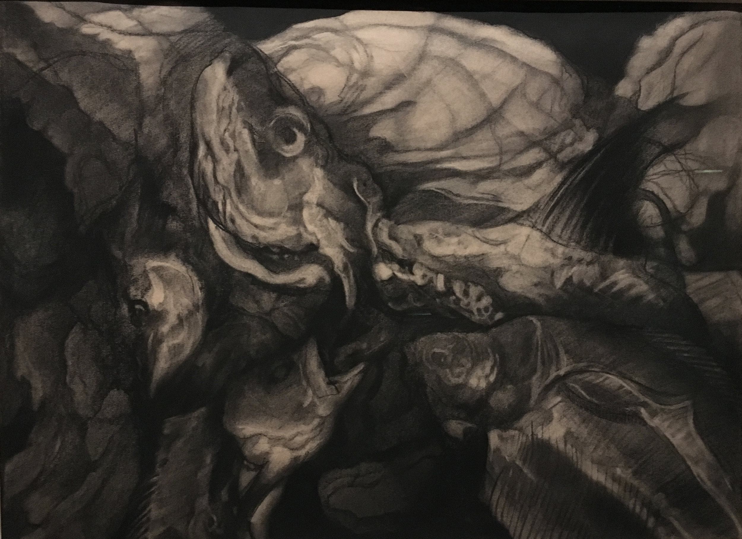 Fish, Still Life, 1953, charcoal on paper, Hyman Bloom (Photograph J.Cook)