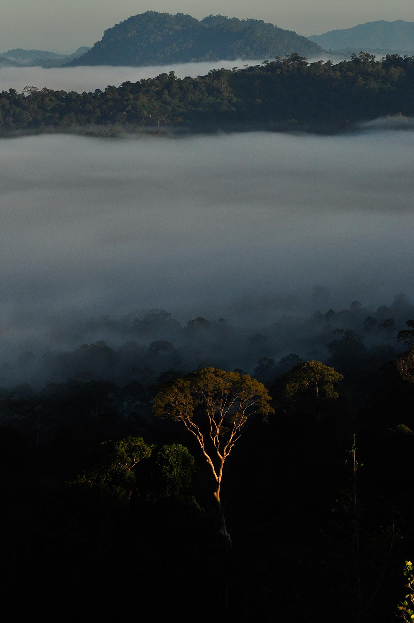 AR_Borneo21.jpg