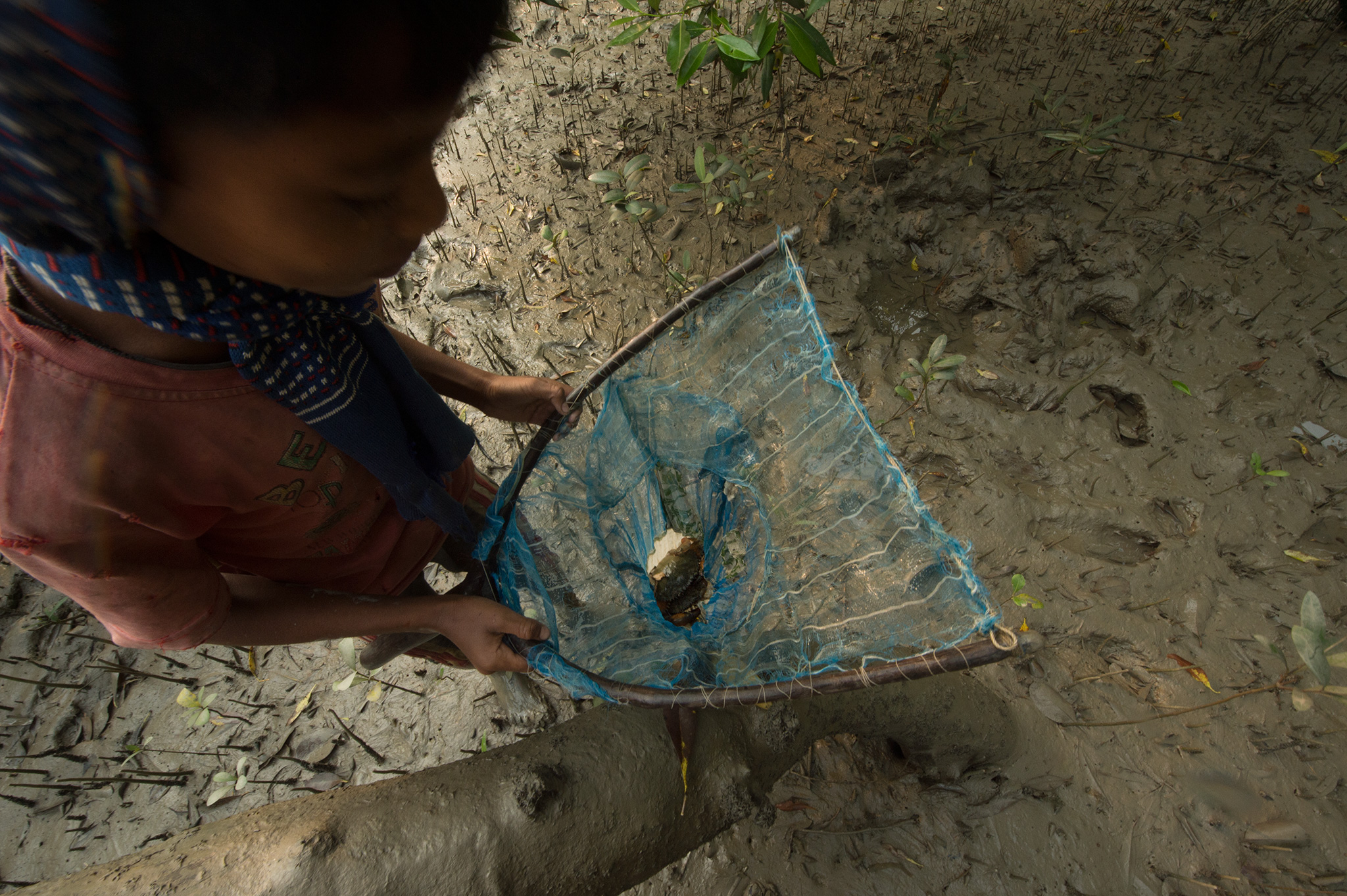 Borun, the younger son, shows off two mud crabs in the net.