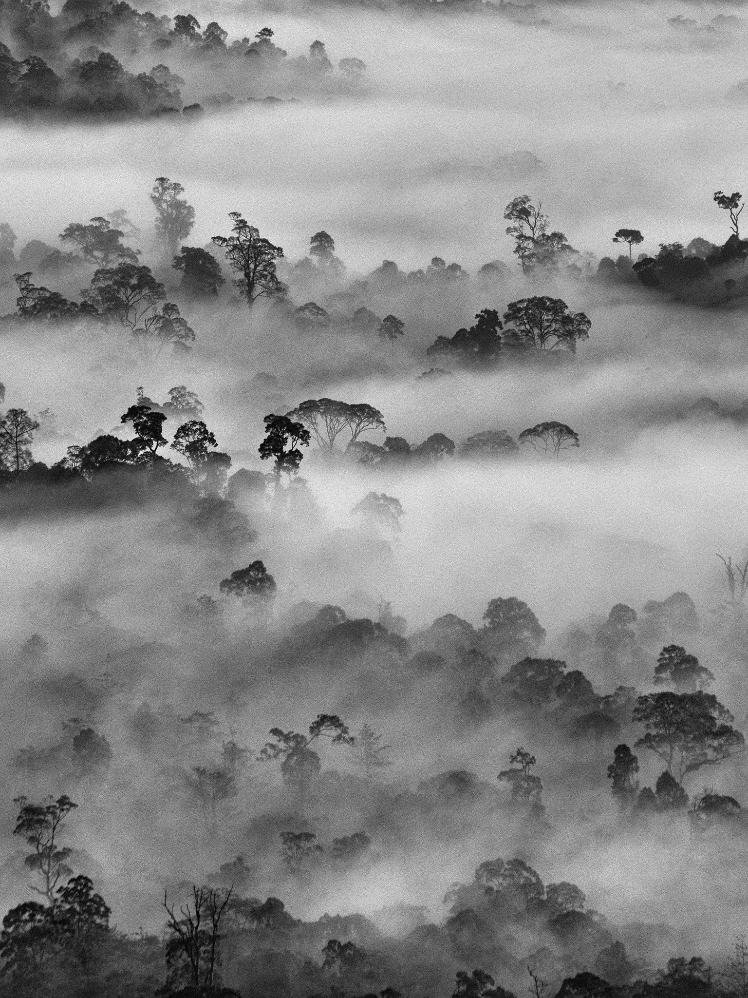 RAINFOREST DREAMS:  See sizes and buy