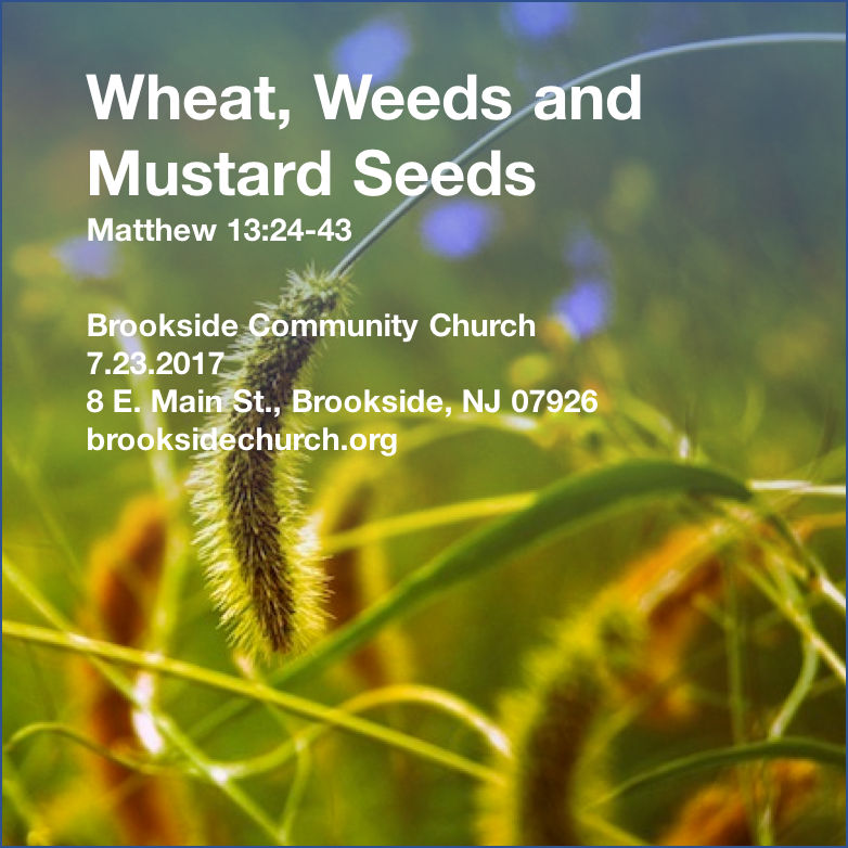 Wheat, Weeds, and Mustard Seeds