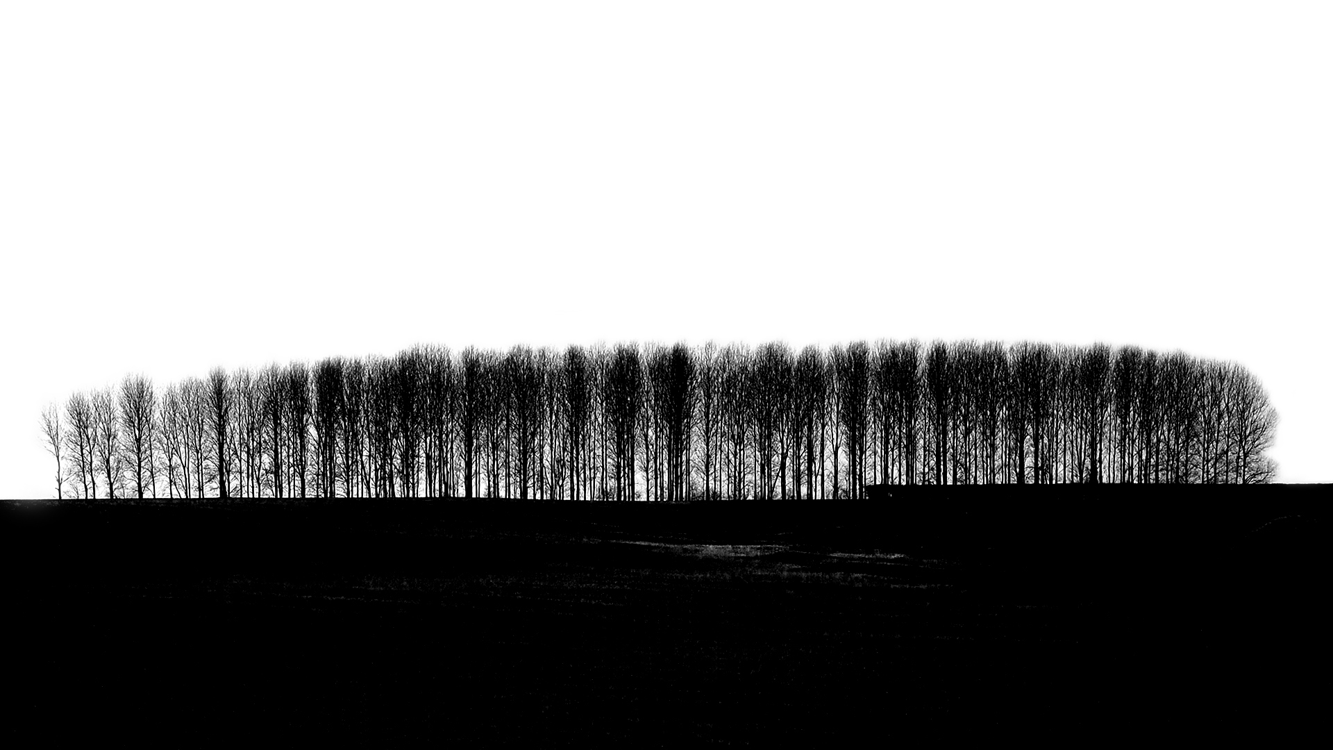 Solar plate etching - Copse, Northern France. © Guy Butters 2017, from an original photograph