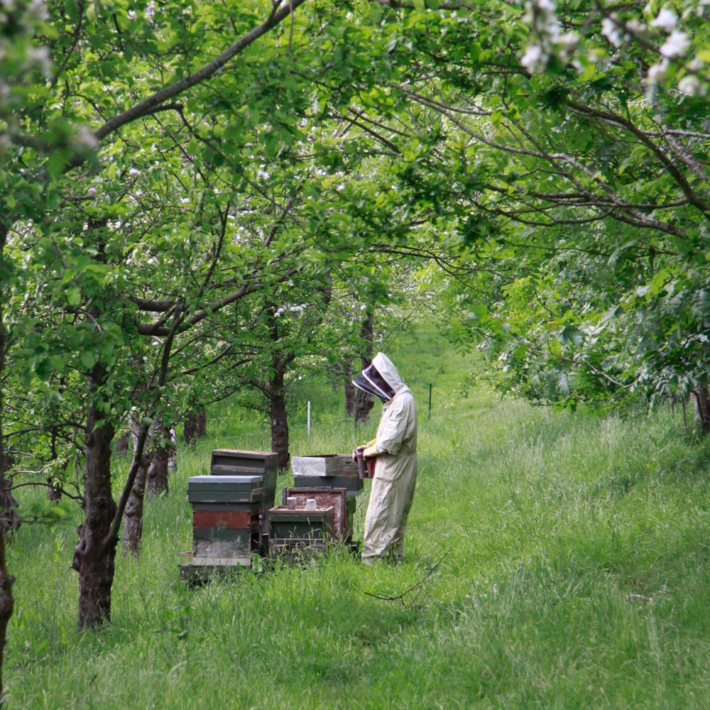OrchardBeekeeping.jpg