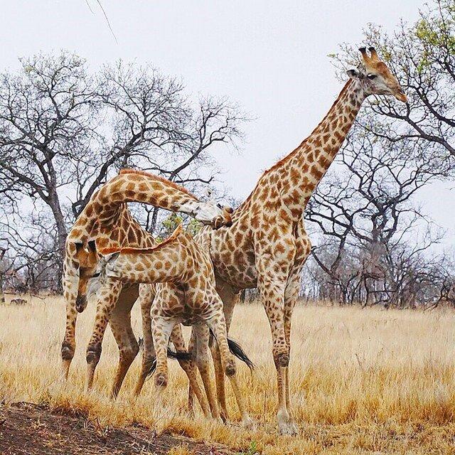 animals 7.jpg