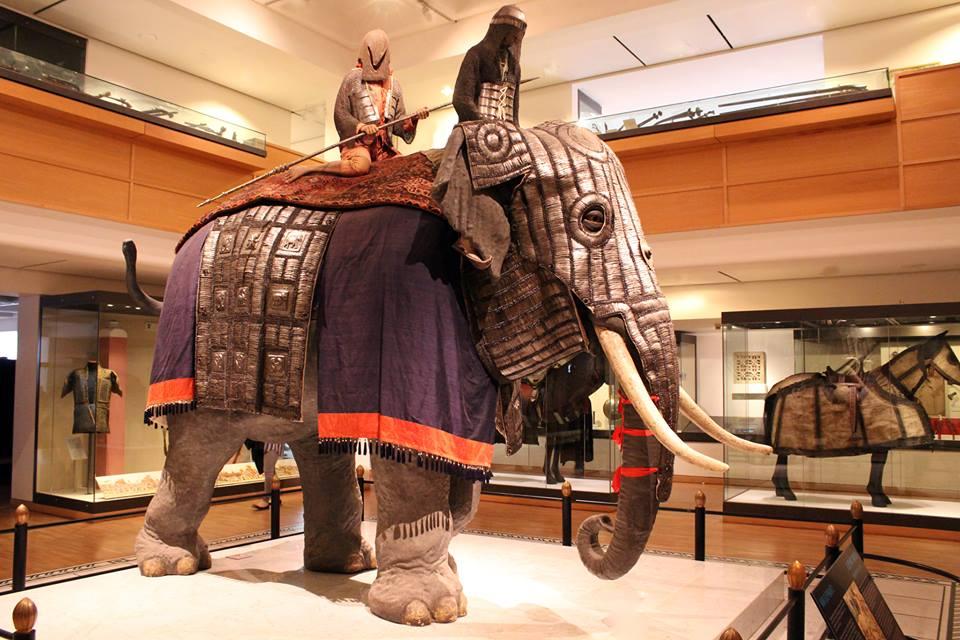 Asian war elephant.jpg
