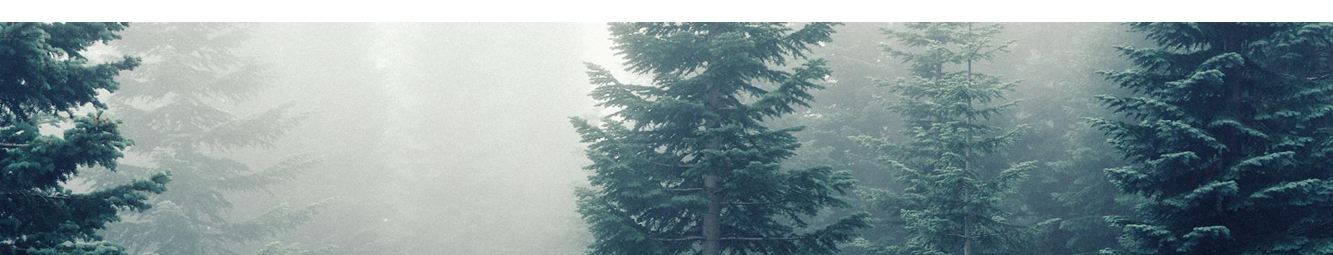 Fir Tree Partners.jpg