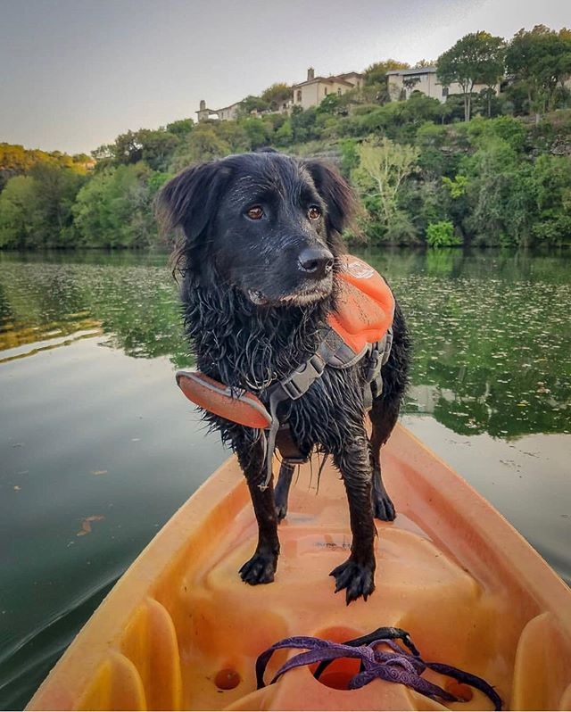 Happy Friday! It's time to show off your weekend adventures! . 📸 @bootheblackdog 📸 @aurora.atx . . Follow, tag us and use #dogsaroundaustin in your weekend posts for a chance to be featured. . . . . . #waterdog #adventure #adventuretime #adventuredogs #kayaking #dogsonkayaks #dogsonadventures #weekend #weekendvibes #atxliving #austinliving #atx #austin #austintx #austintxdogs #austinlife #atxlife