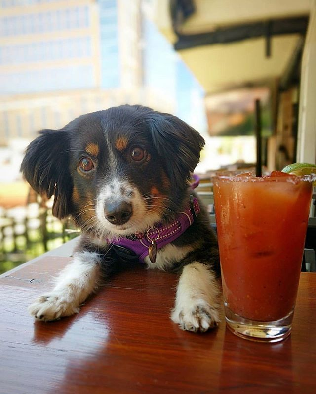 Weekends in Austin are for brunching! . 📸 @tipsyinaustin . . Follow, tag us and use #dogsaroundaustin for a chance to be featured. . . . . . #brunch #weekend #weekendbrunch #saturdayvibes #dogswhobrunch #brunchdogs #atxbrunch #atx austin #austindogs #dogsofaustin #dogsof512