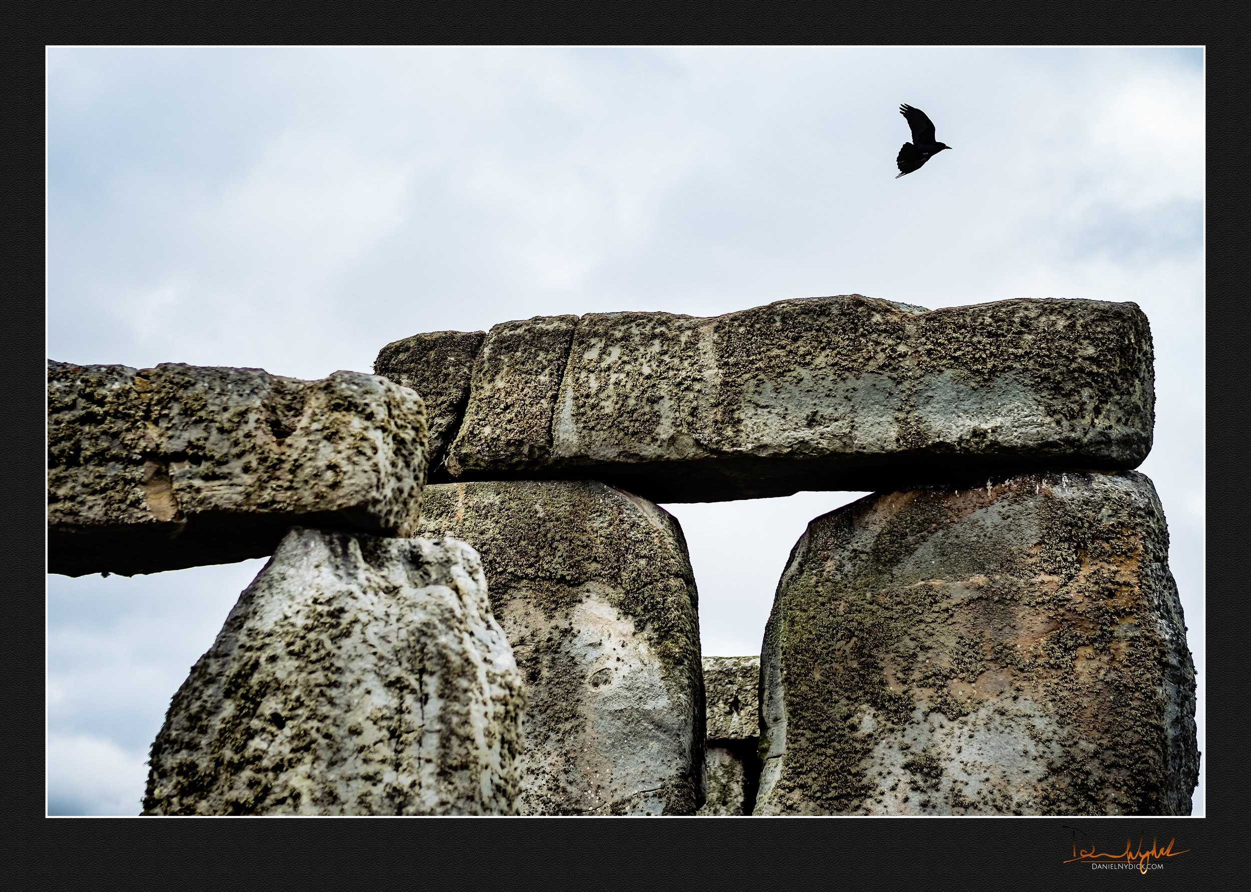 stonehenge, bird, blackbird,