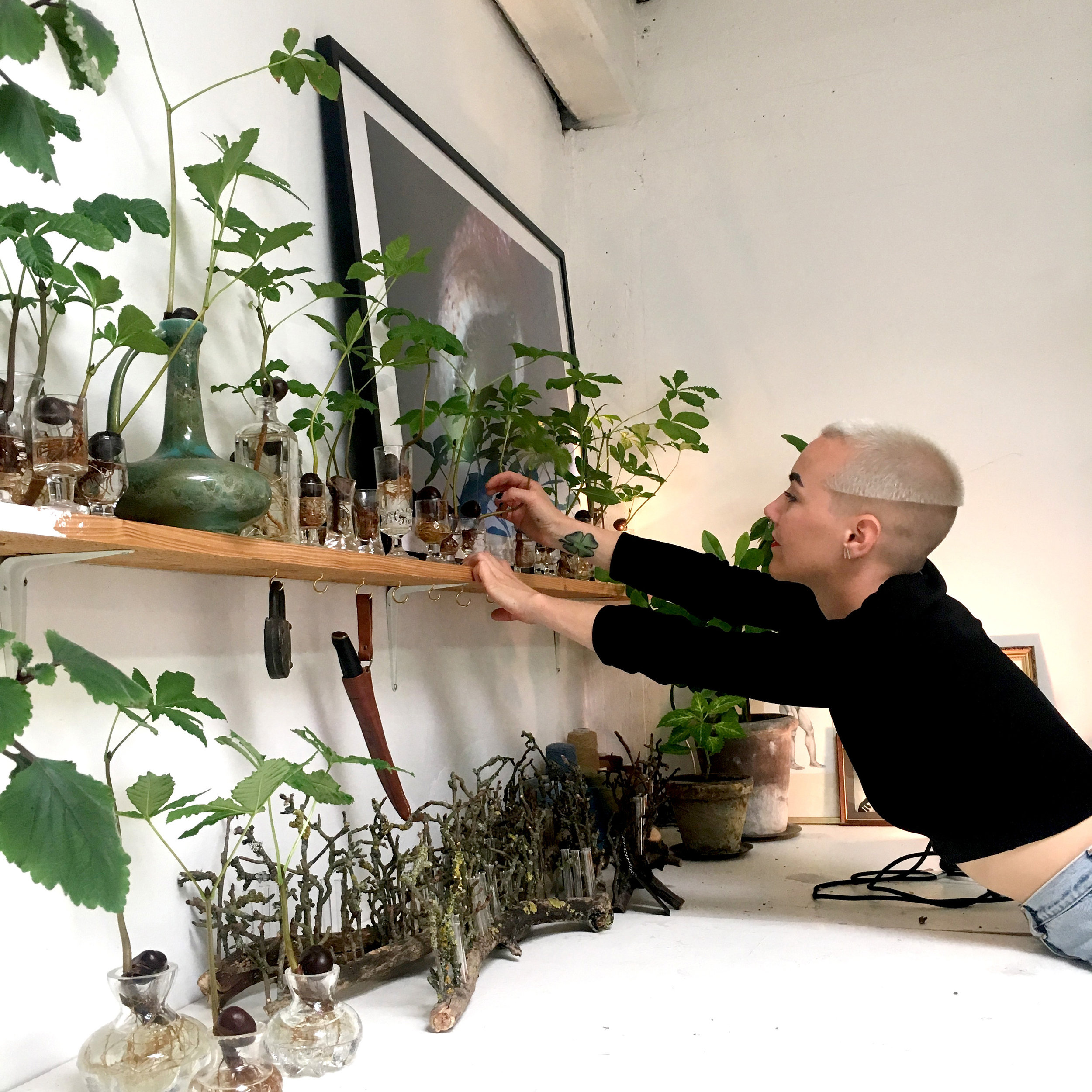 My chestnut seedling collection. My studio, Malmö 2017