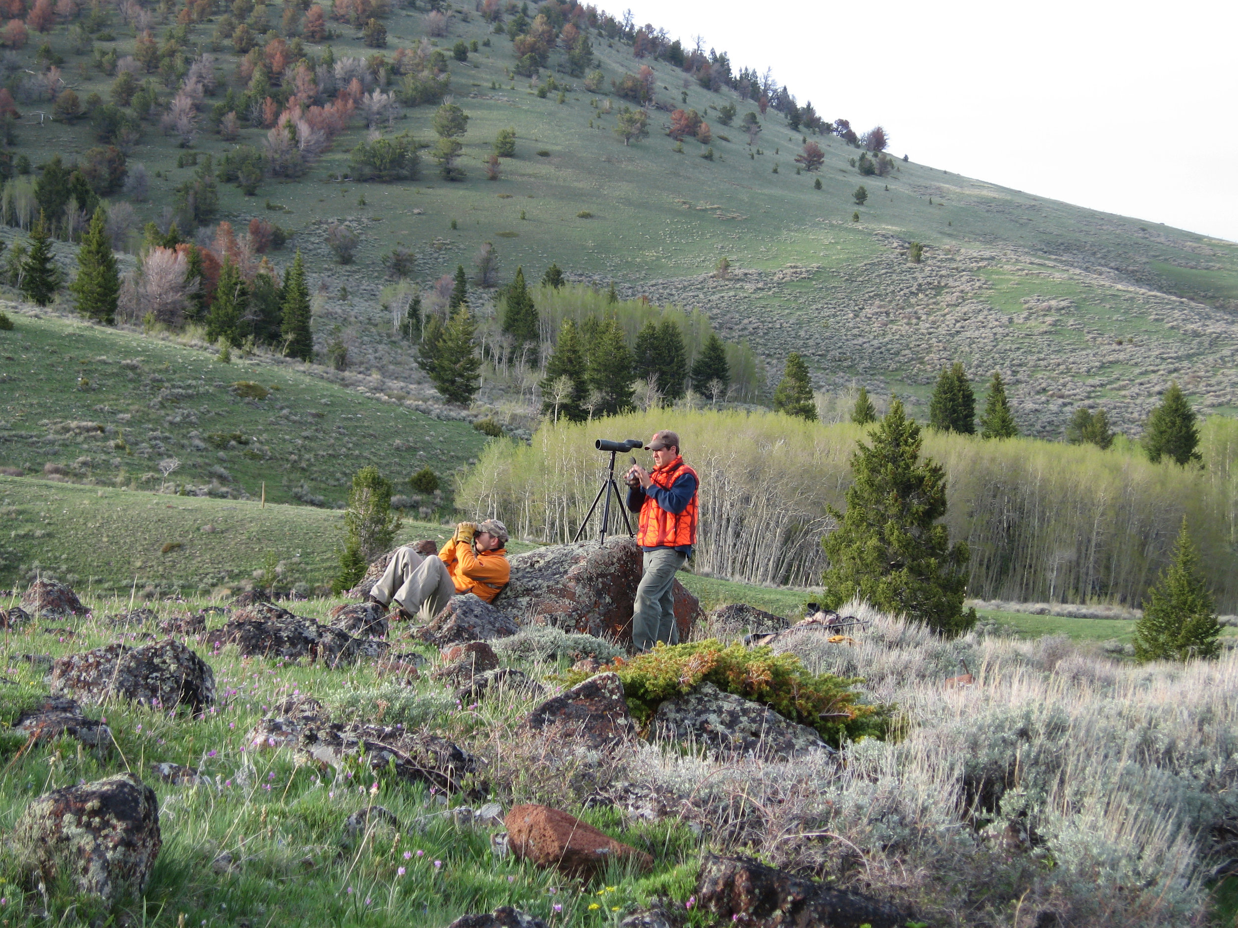 Scott Falagan and Mark Edgell glassing for Montana high country bears.