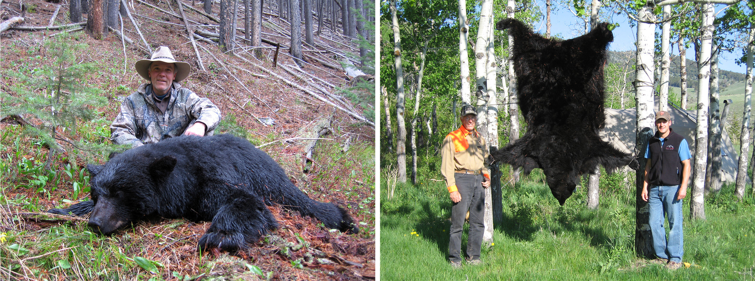 LEFT:  My hunting partner, Bill Wilson of Missoula, MT, took this exceptional black bear while hunting with me in the spring of 2011.  RIGHT:  Mark Edgell, of Missoula, MT, took this exceptional bear near an elk calving area in Central Montana. This was his first spring black bear and will be a lifetime memory for him and his family.