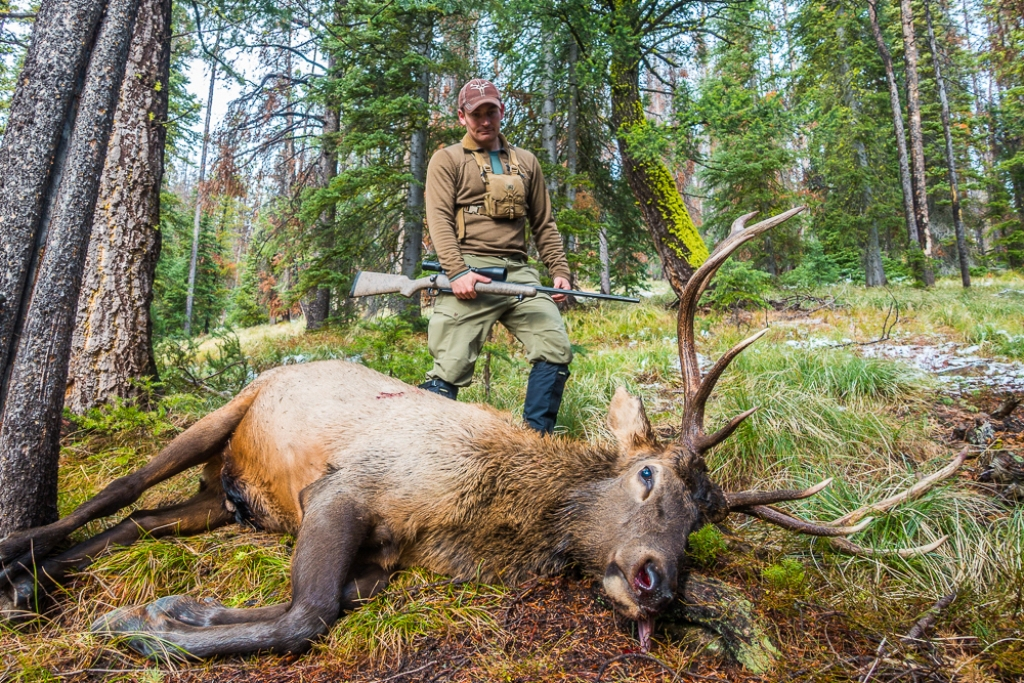 Montana bull taken with a Cooper model 52 in 7mm Remington Magnum