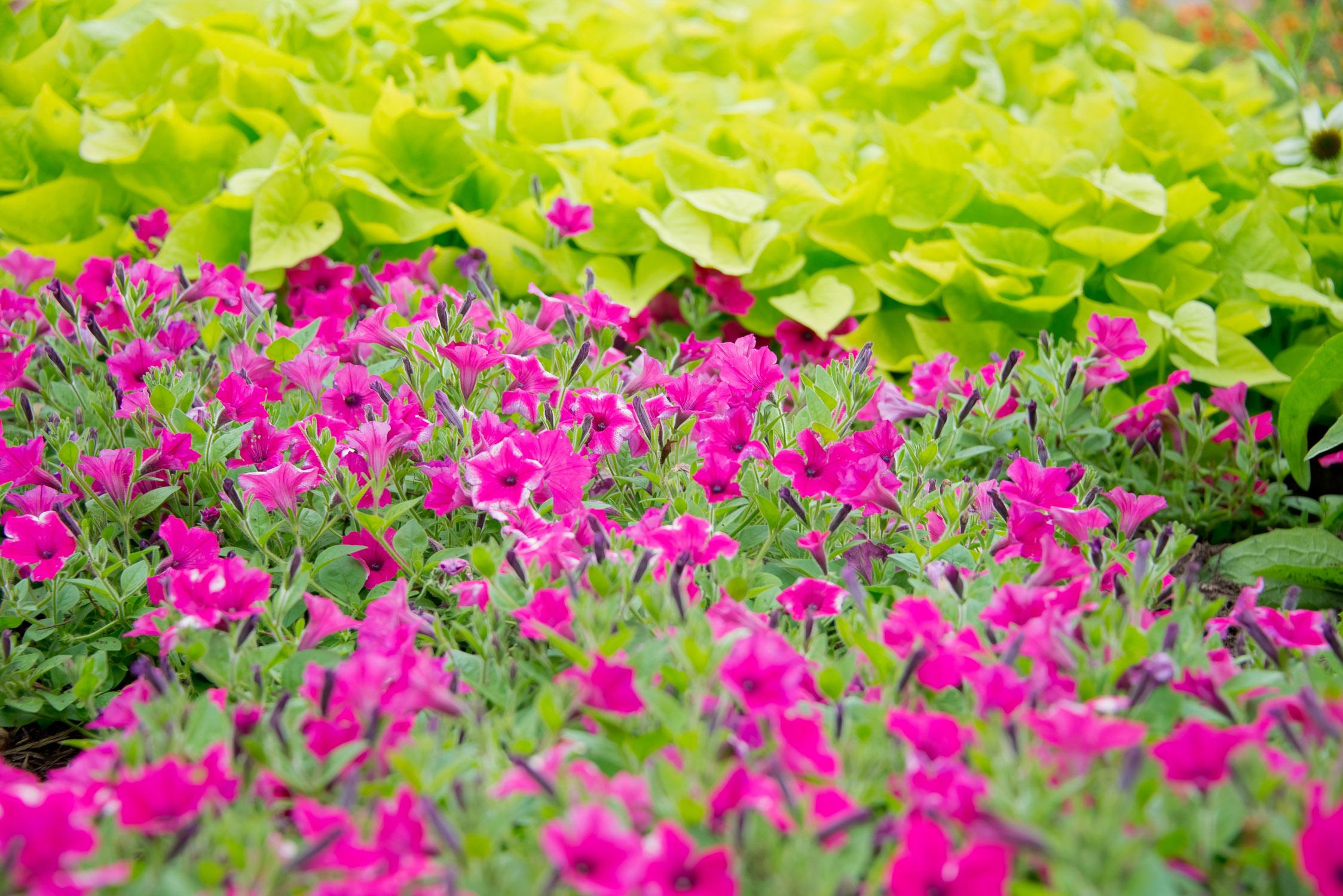 GardenEvent_Photos_Tiffany_012.jpg