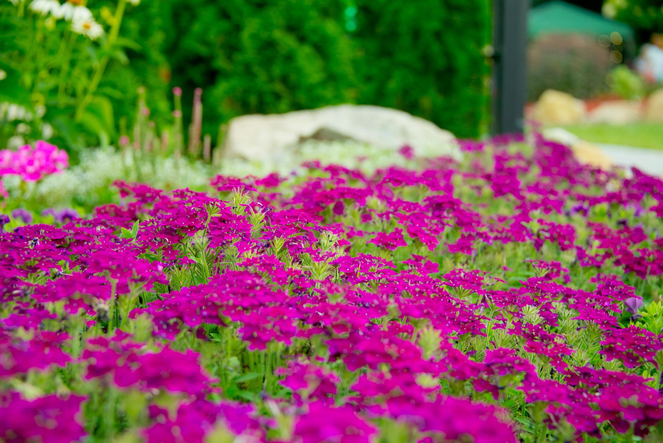 GardenEvent_Photos_Tiffany_027.jpg