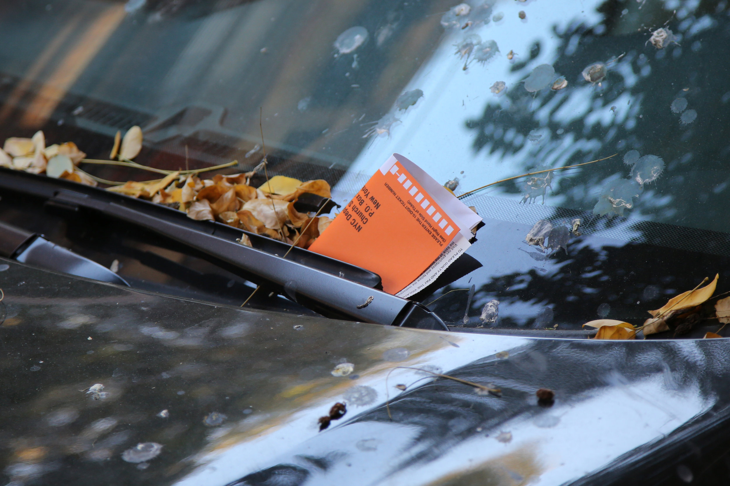 Parking Enforcement and Collection Professionals