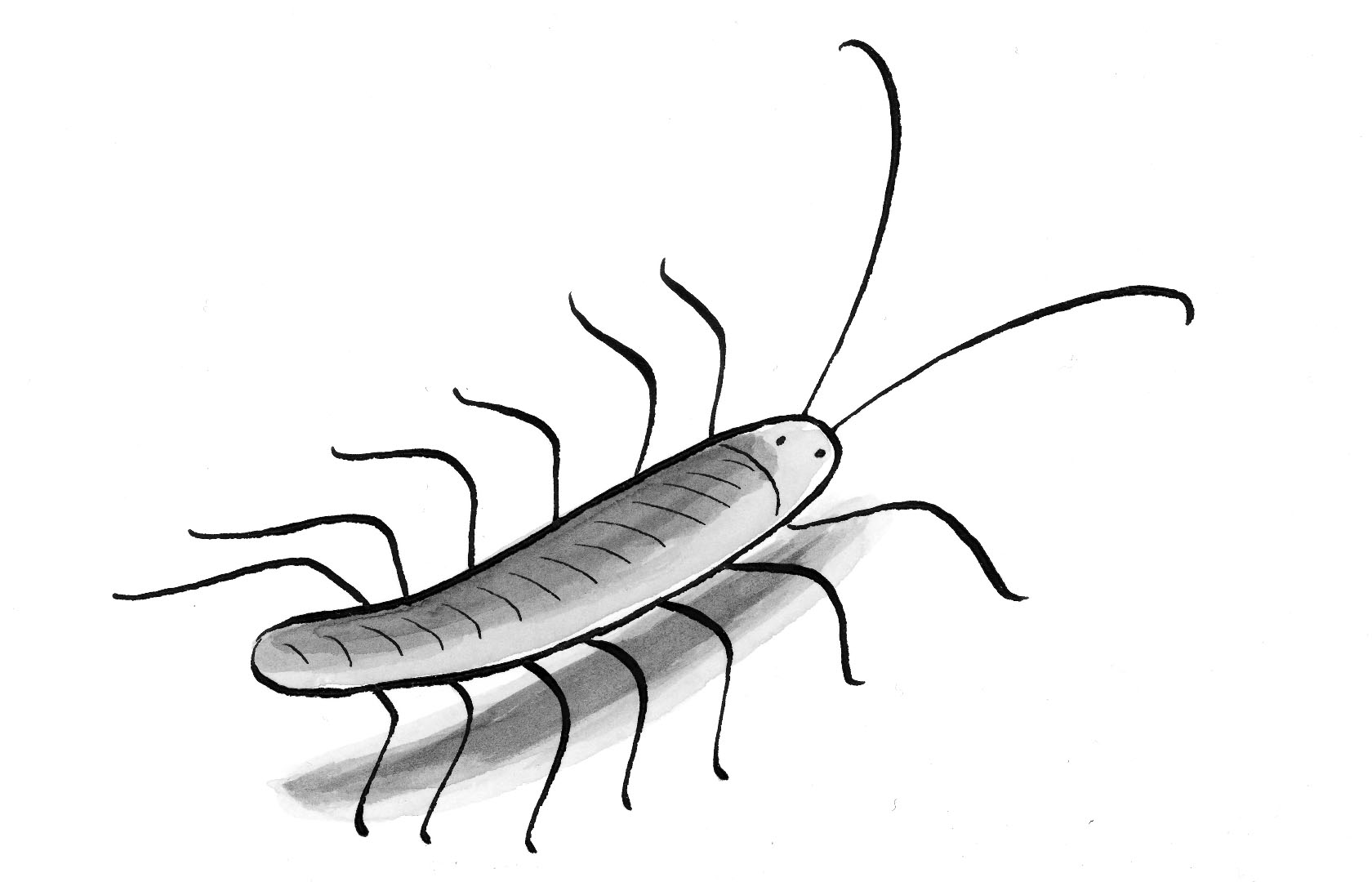 """A drawing from my graphic short story  """"The Power of Centipedes"""""""