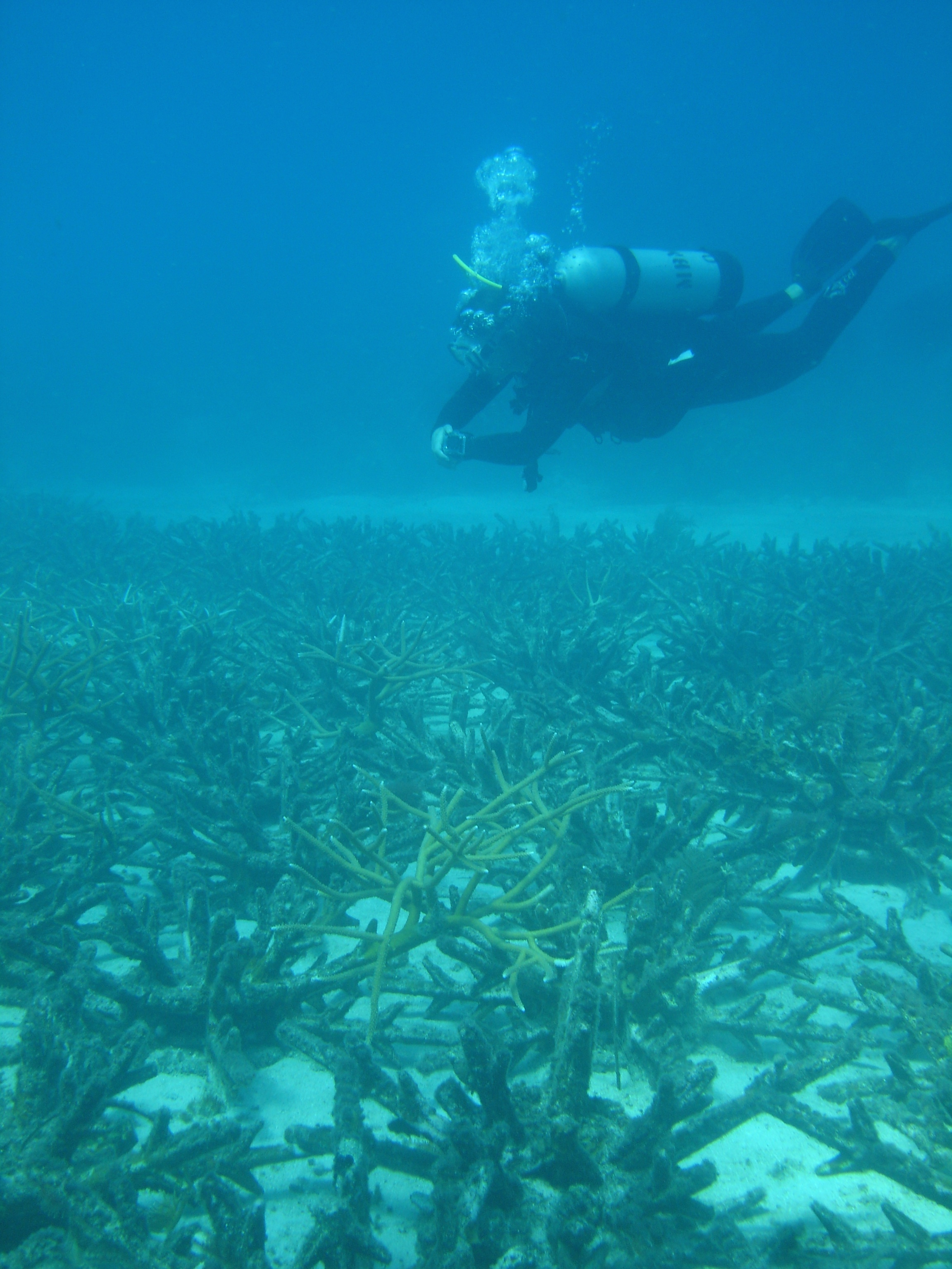 Dredge remediation, coral augmented Ecoreef, Montego Bay