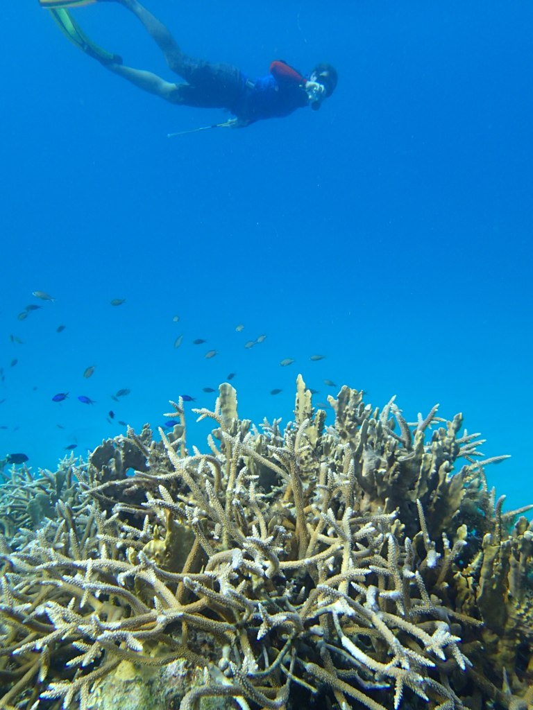 Snorkelling on high-colour, high-value reef