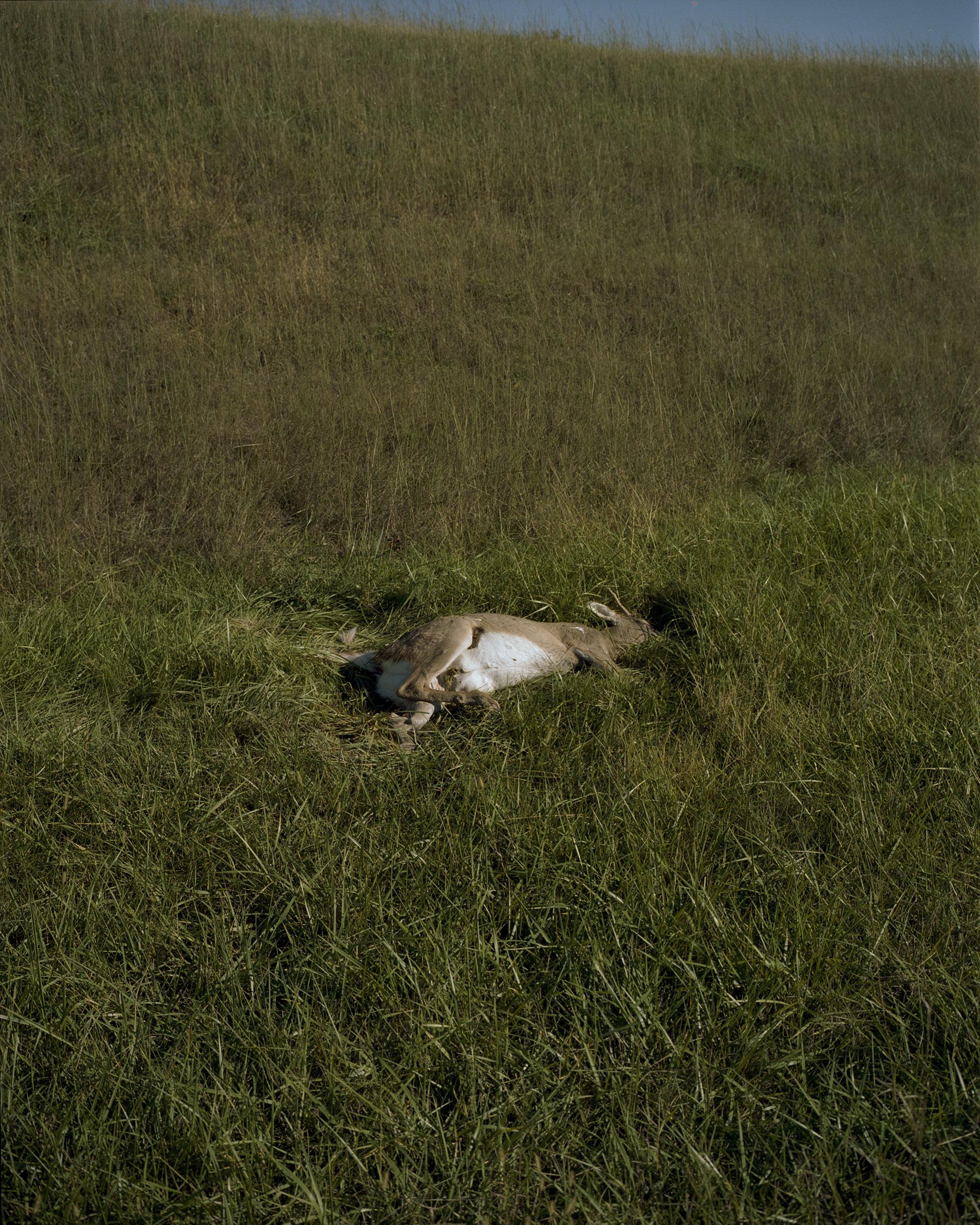 dead deer003.jpg