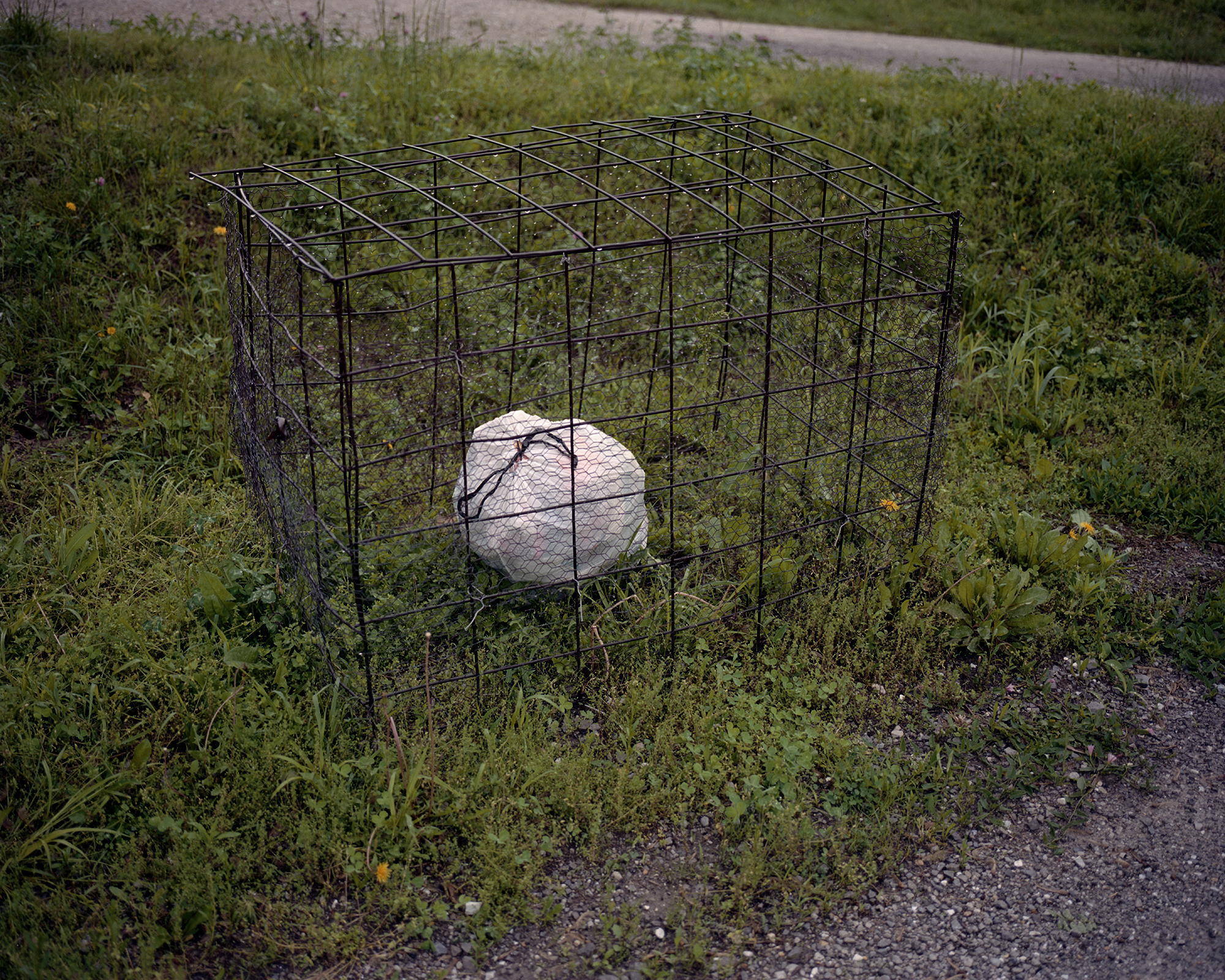 trash cage.jpg