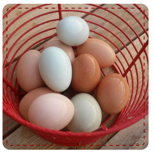 Pastured Eggs2.png