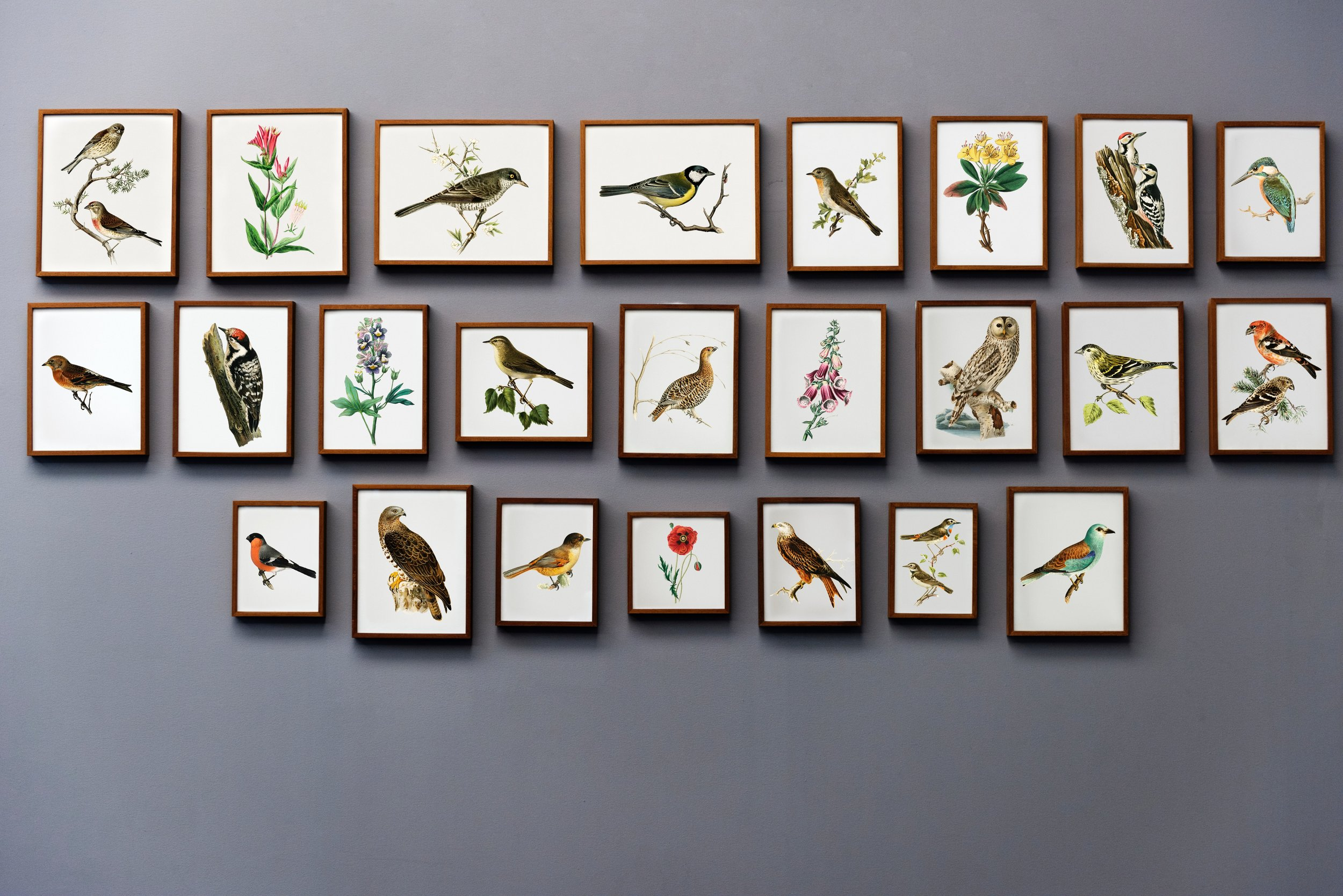 Gallery wall with a bird and floral theme