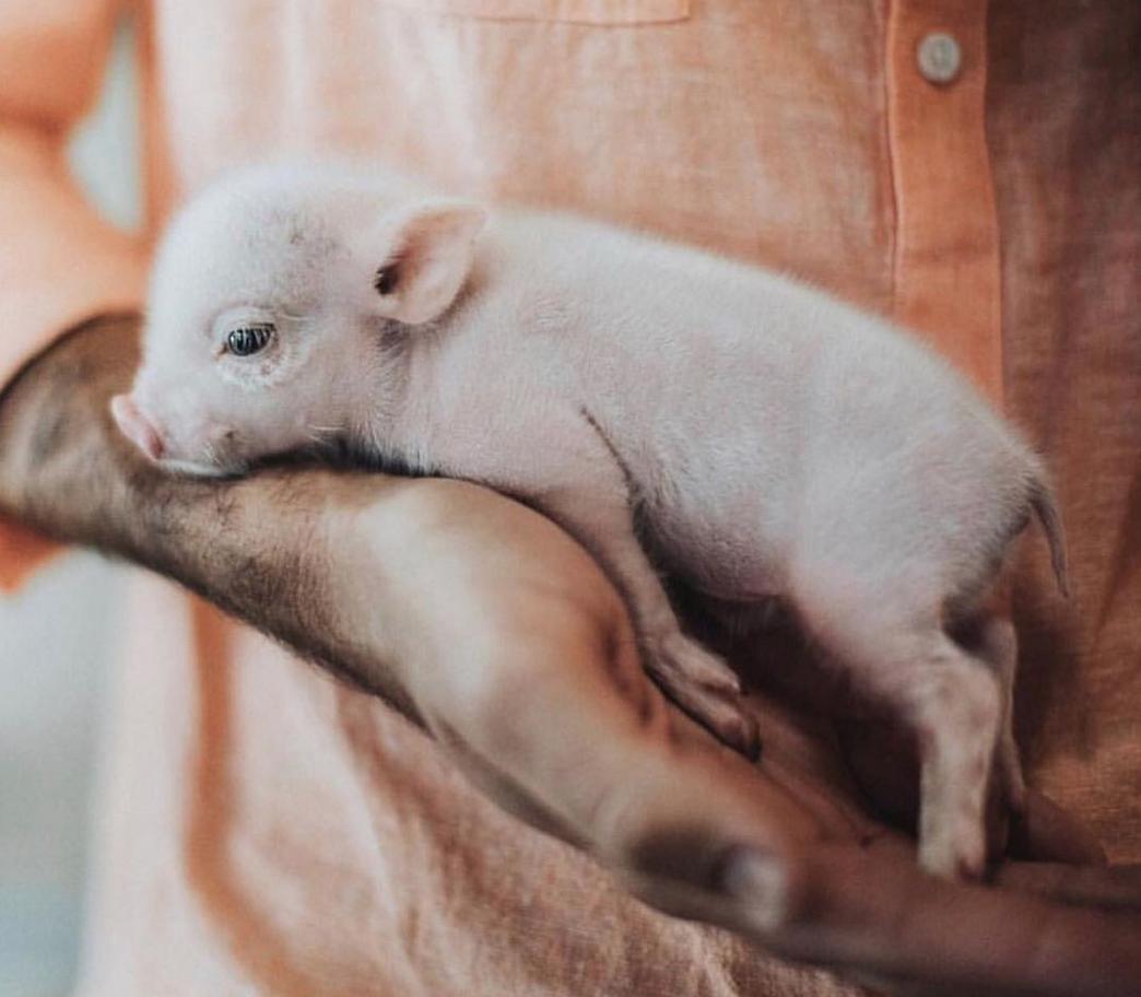 #empati   #medfølelse   #dyrsrettigheter   #brennpunkt   @nrkbrennpunkt   @dyrsrettigheter  photo: Sammantha Fisher