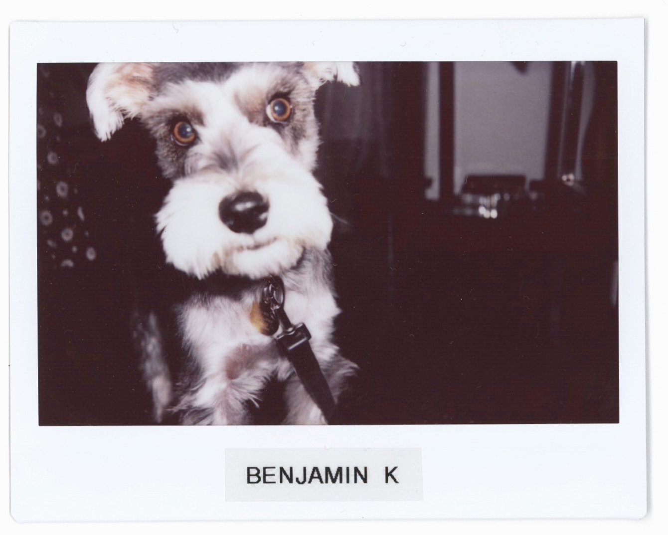 My dog-son, Benji  @BENJIKLMNOP