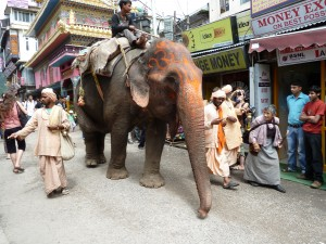 Sadus walking through Dharmasala with their elephant -  I love elephants for their mighty mystery and intelligence - what a gift to see this procession.