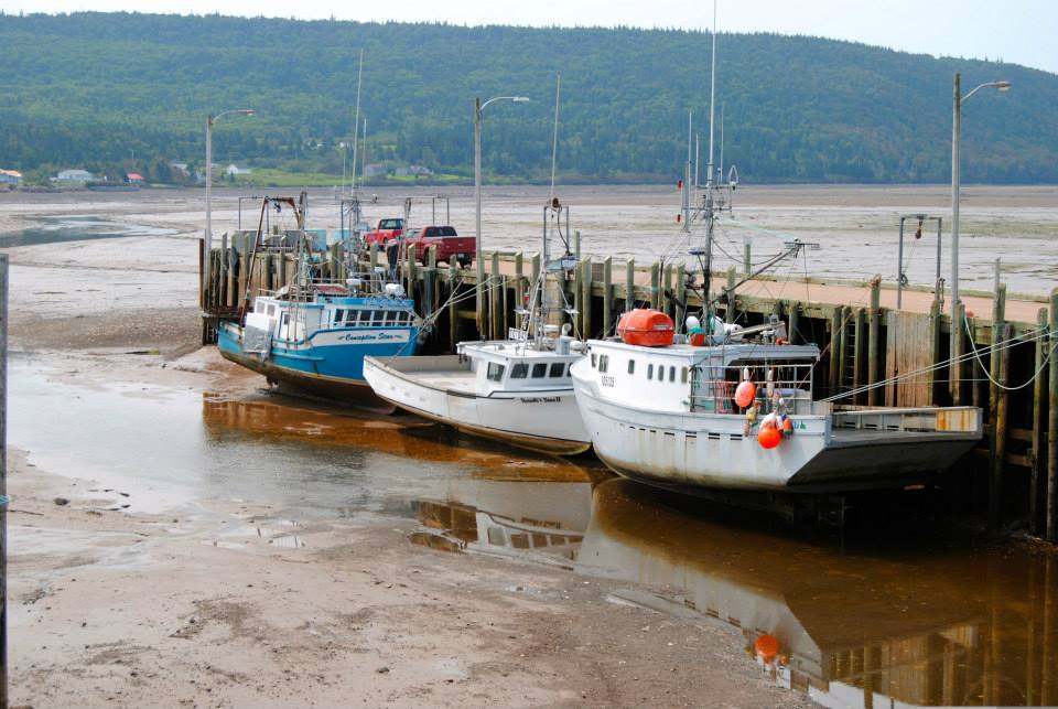 boats at the Advocate Wharf at low tide .jpg