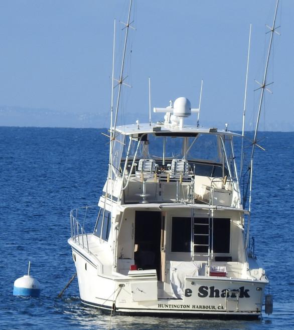 z boat shark.jpg