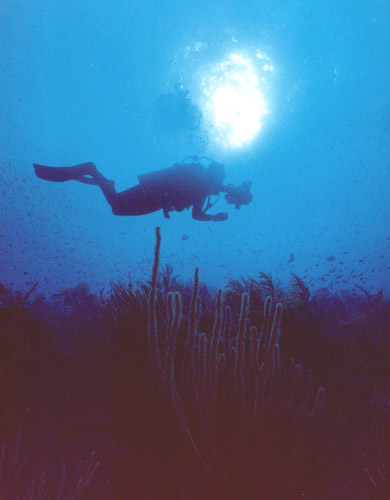 Siloueted Diver.jpg