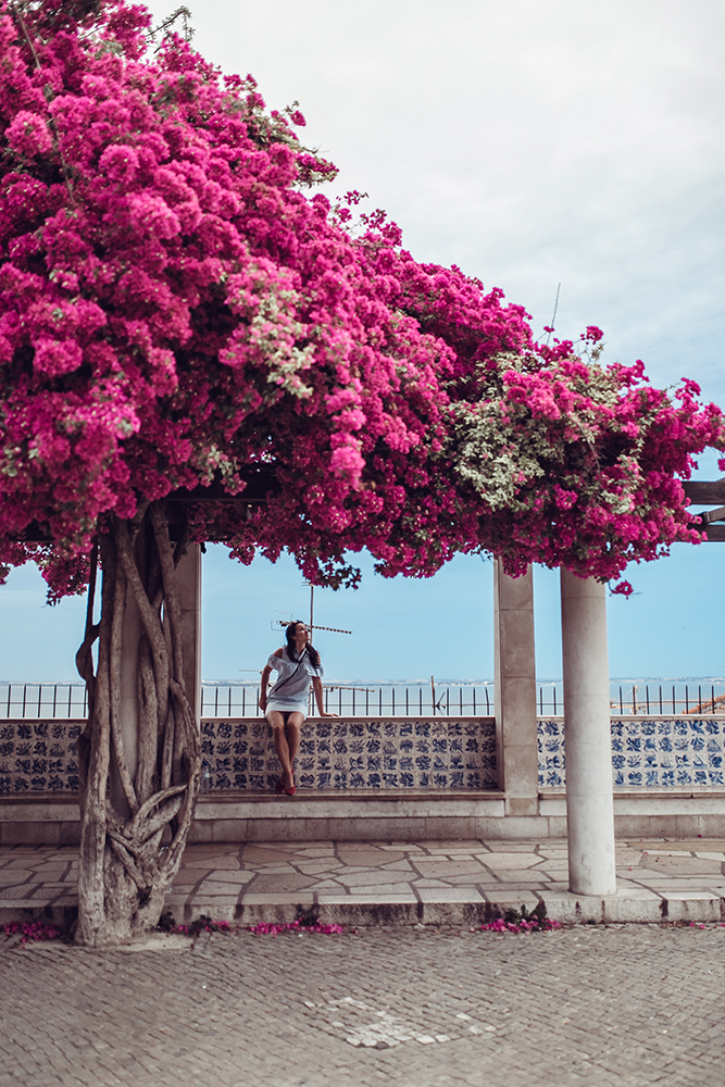 go in may to see lisbon in bloom