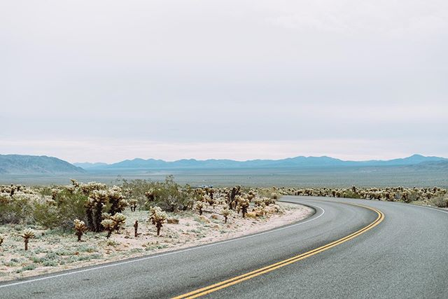 Going where the flowers are // More on blog ⚡️ from our trip to Joshua Tree with @hipcamp #findyourselfoutside⠀ .⠀ .⠀ .⠀ .⠀ #calledtocreate #justgomake ##photobugcommunity #latinosoutdoors #brownpeoplecamping #vsco #vscox #vscocam  #makeyournextmove #letscamp #optoutside #passionpassport⠀ #shotoniphone ##togetherjournal #travelblogger #solarcollective #traveltogether #godisgood #welltravelled #doyoutravel #teamtravelers #jesussaves⠀ #keepthefaithalive #christiancouples #adventurecouple #joshuatree #california