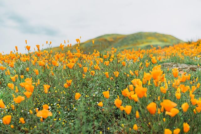 In case you haven't heard, there's a super bloom happening in Lake Elsinore 🙃 ⁣⠀ ⁣⠀ .⁣⠀ .⁣⠀ .⁣⠀ .⁣⠀ .⁣⠀ #calledtocreate #justgomake #photobugcommunity #latinosoutdoors #brownpeoplecamping #vsco #vscox #vscocam  #makeyournextmove #letscamp #optoutside #passionpassport⁣⠀ #shotoniphone ##togetherjournal #travelblogger #solarcollective #traveltogether #godisgood #welltravelled #doyoutravel #teamtravelers #jesussaves⁣⠀ #keepthefaithalive #christiancouples #adventurecouple #superbloom #spring2019