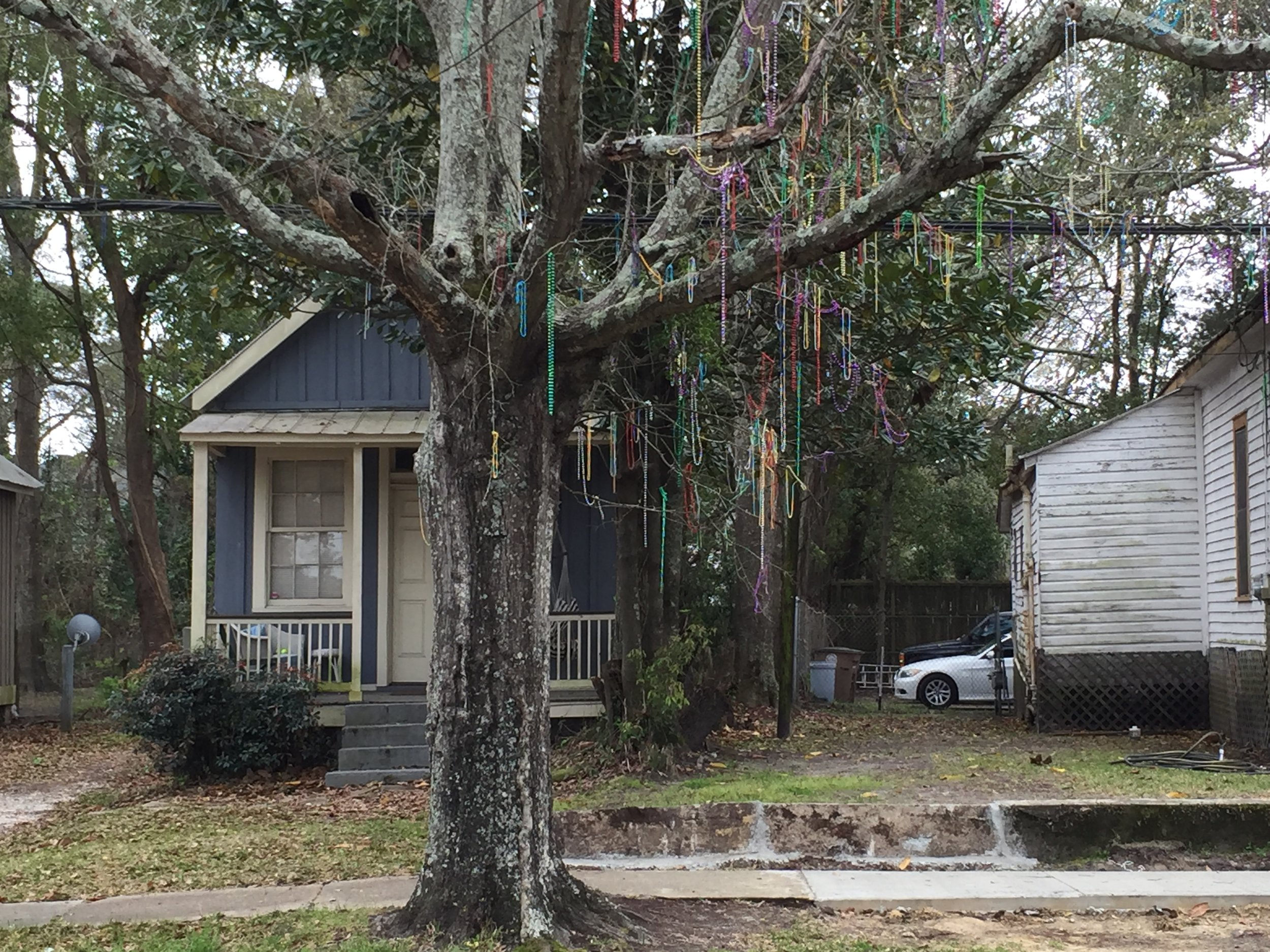 A tree on the same street, showing signs of the recently-ended Mardi Gras.