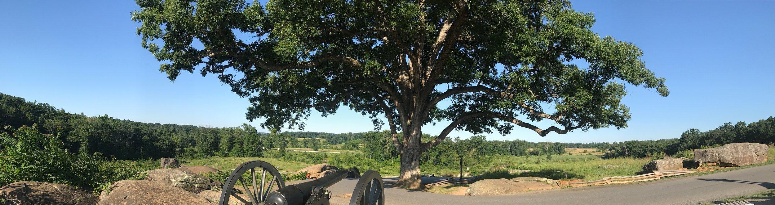 "The ""witness tree"" above Devil's Den."
