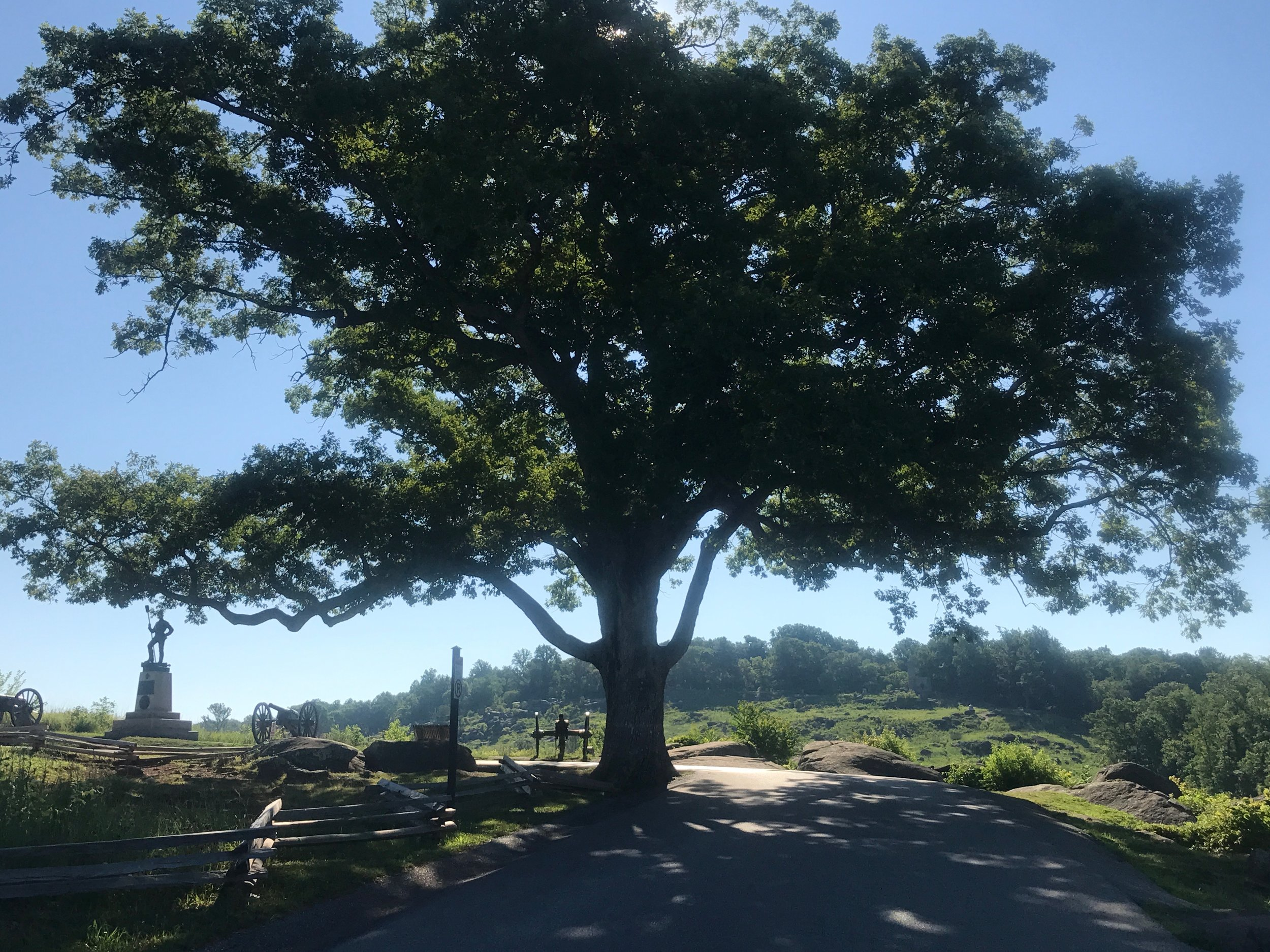 Another view of the Devil's Den witness tree