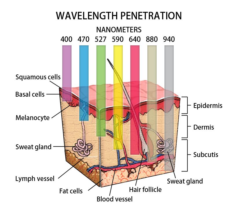 PhotonSmart Wavelength Penetration.jpg