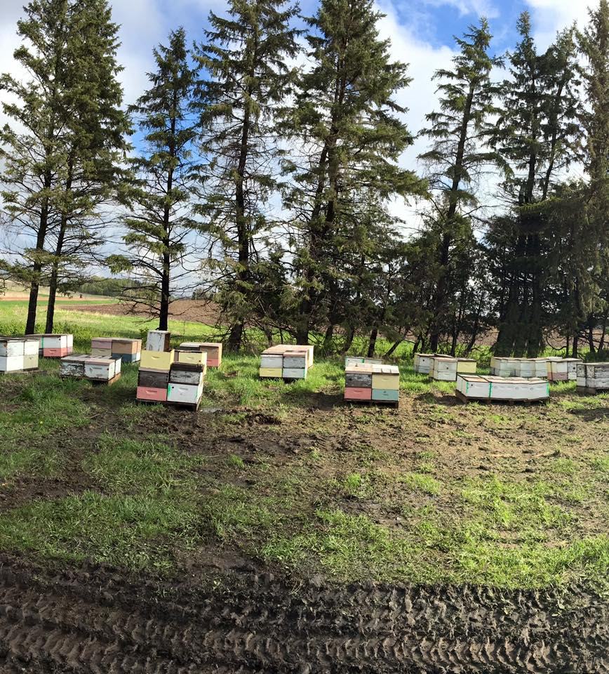 Some of the hives at Ames. Photo Cred: Ames Farm.