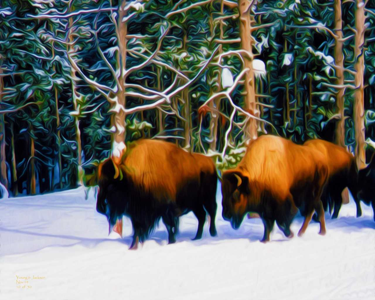 yellowstone in winter 12-18.png