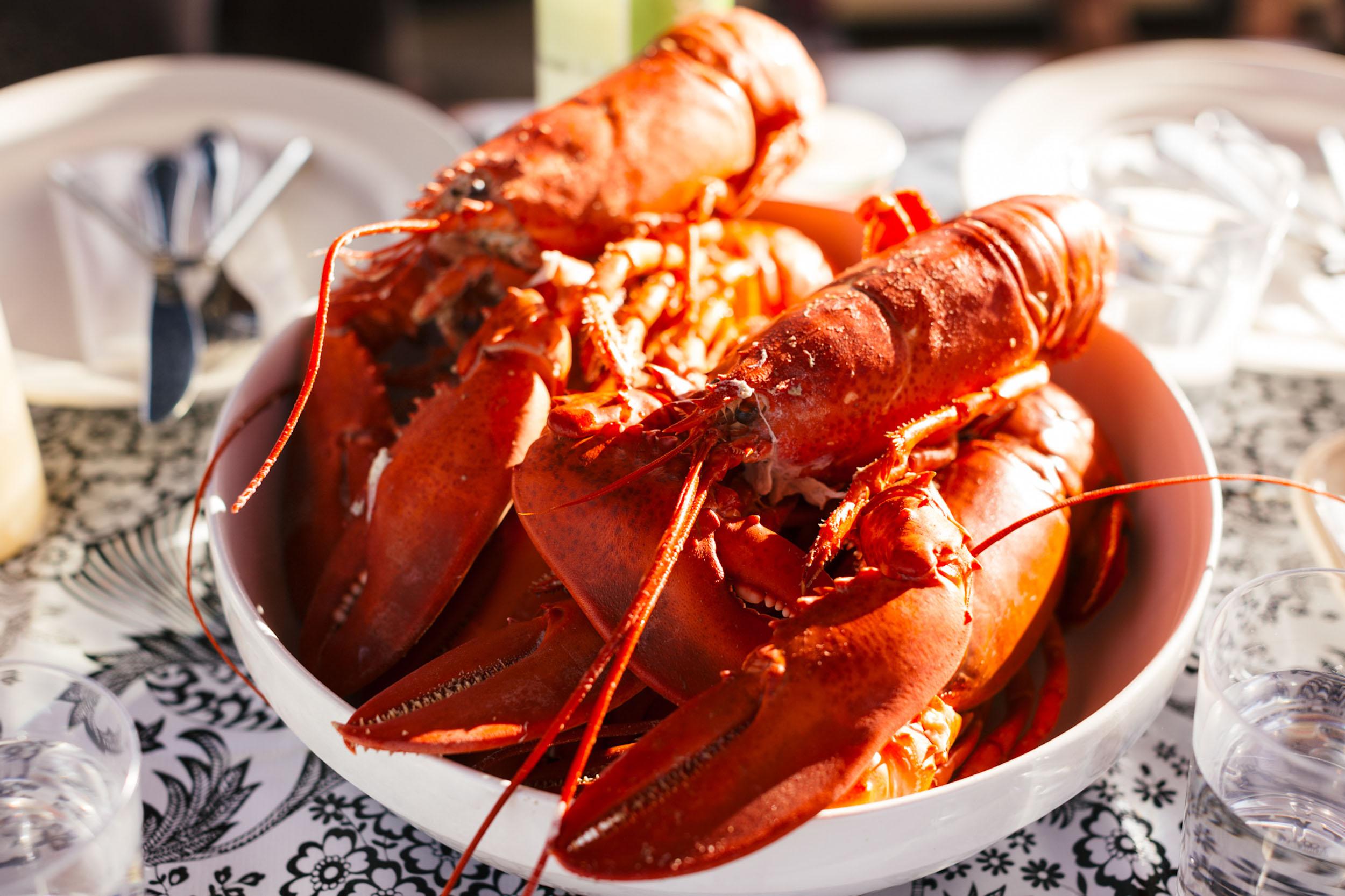 two-lobsters--allagash-brewing.jpg