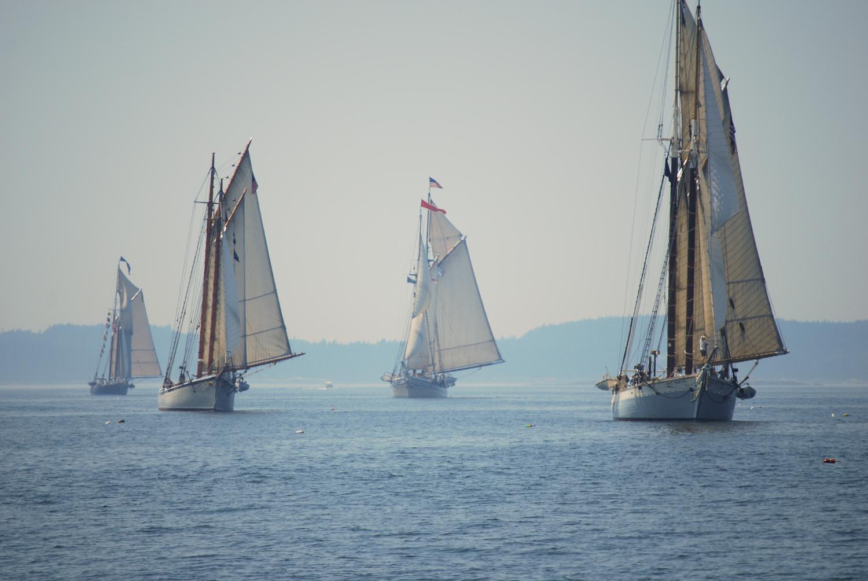fleet-sailing.jpg