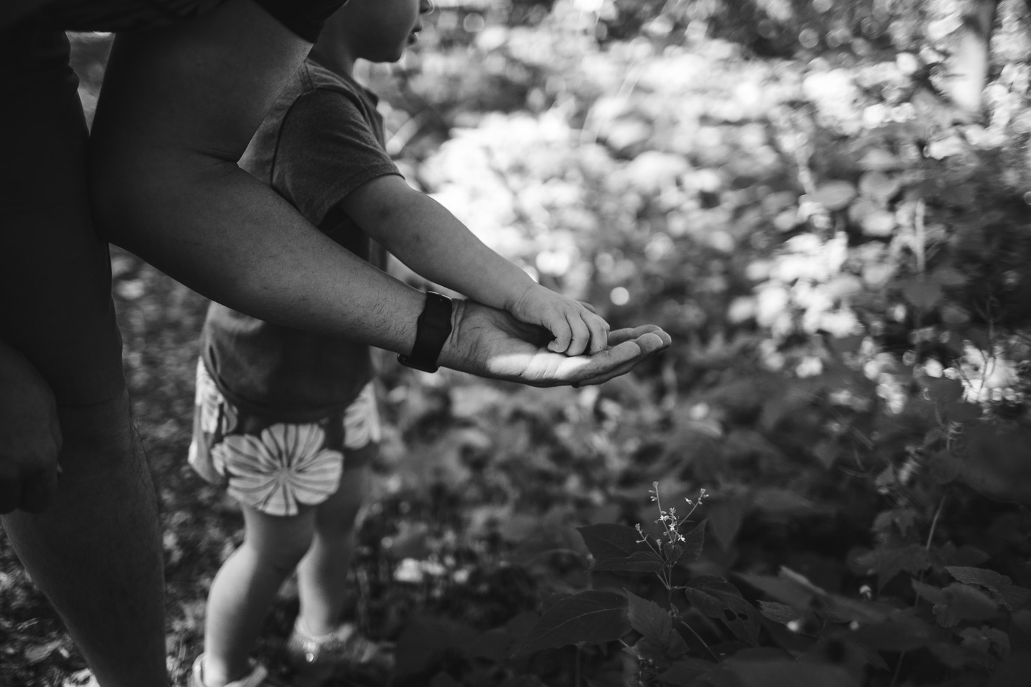 Child taking blackberries from father's hands