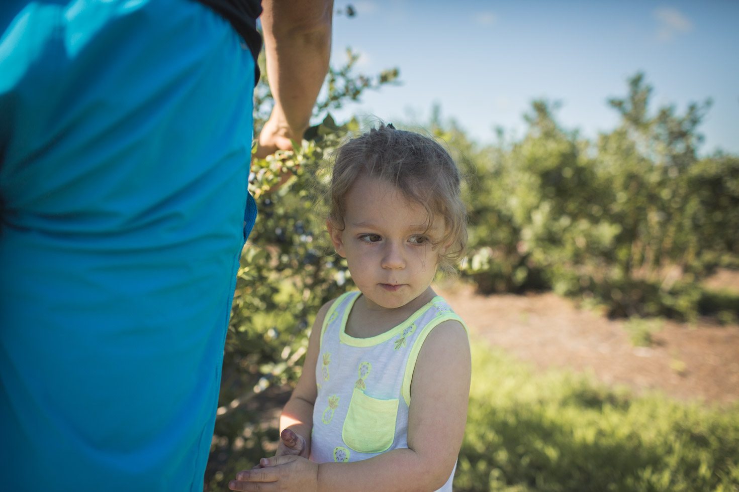 Toddler girl connecting with father on blueberry farm