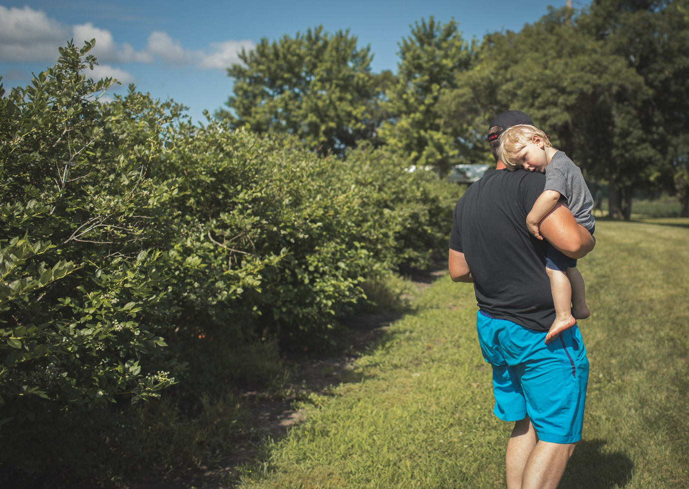 boy cuddled upon fathers shoulder at blueberry field, connected, powerful, compassionate