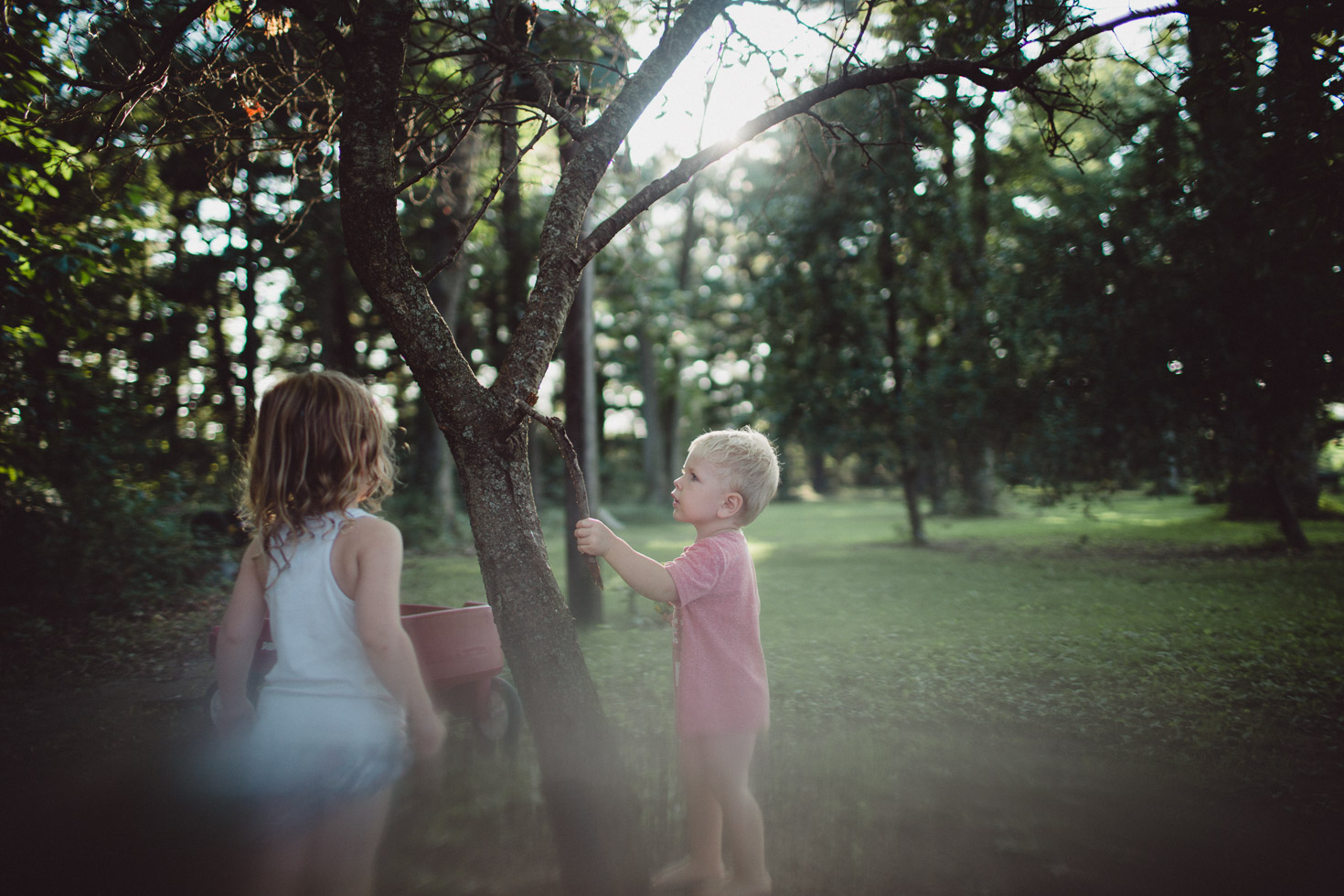 Children playing by tree in yard with sunset, backlit
